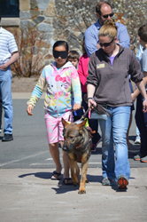 A girl takes a blindfold walk with a Fidelco Guide Dog at Fidelco's Open House on May 3rd.