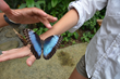 A Blue Morpho Butterfly lands on a visitors hand on a Metamorphosis Corporate Sustainability Retreat.