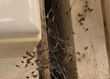 New Spider Spray Offers Way to Kill Spiders Safe, My Cleaning Products...