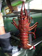 Lobster Helps Vets: San Pedro Fish Market Announces Major Fundraiser...