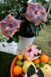 The Tropic Escape Collection from Costa Farms®