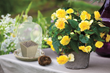 Spring Bulb Gift Kit from Longfield Gardens