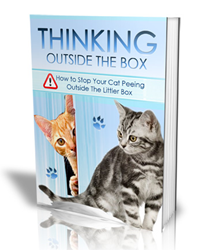 thinking outside the box review
