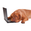Image of a dog sleeping on a laptop
