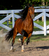 The Sooner State Peruvian Horse Extravaganza Comes to Duncan, The...