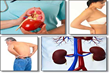 All Natural Kidney Health and Kidney Function Restoration Program Review Reveals To People An Effective Treatment For Kidneys