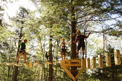 Participants explore an aerial adventure park