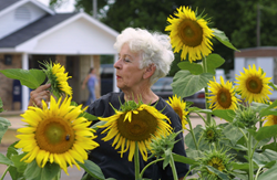 Sunflower Trail and Festival, along the Boom or Bust Byway
