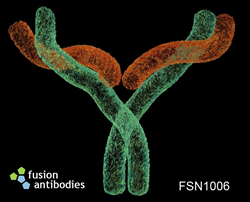 FSN1006 Antibody Targets Pancreatic Cancer