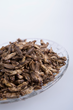 Farmed Edible Crickets