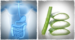 positive and side effects of aloe vera juice on the human body