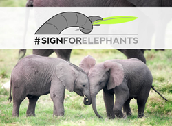 #signforelephants