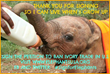 Help save elephants from extinction and join call for complete ban on ivory sales. For more visit www.elephantsUSA.org