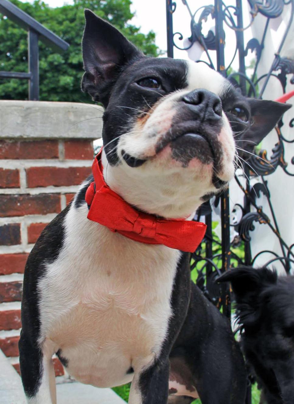 Coco S Heart Dog Rescue Mn