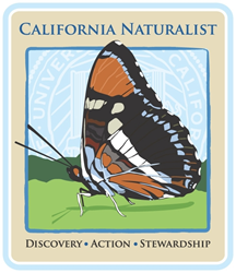 The California sister butterfly is the mascot of the California Naturalist program.