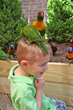 "Birds may land on your hand, arm or even on your head in ""Lorikeets,"" a fun summer exhibit at The Maritime Aquarium at Norwalk."