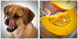 healthy foods for dogs