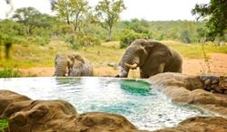 Safari Holiday