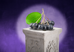 Spotlight on Aronia berries