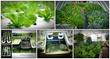 easy diy aquaponics system