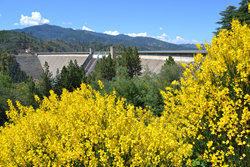 Shasta Dam in Northern California with leaves changing on trees in the foreground.