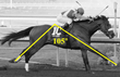 Barbaro 105 Degree Stride Angle