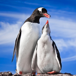 A Brief Review about The Penguin Method by Samantha Sanderson