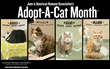 Funny Fur Donates In Honor Of National Adopt A Cat Month