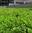 MetroTop Plaza Associates Installs Xero Flor Green Roof System at the...