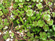 Xero Flor Green Roof Plants