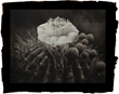 Saguaro Cactus, Platinum Limited Edition Photographic Print by Cy DeCosse