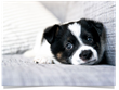 Animal Specialty Group Issues Warning Against Parvo Outbreak; Strongly Advises Dog Owners to Get Their Pets Vaccinated