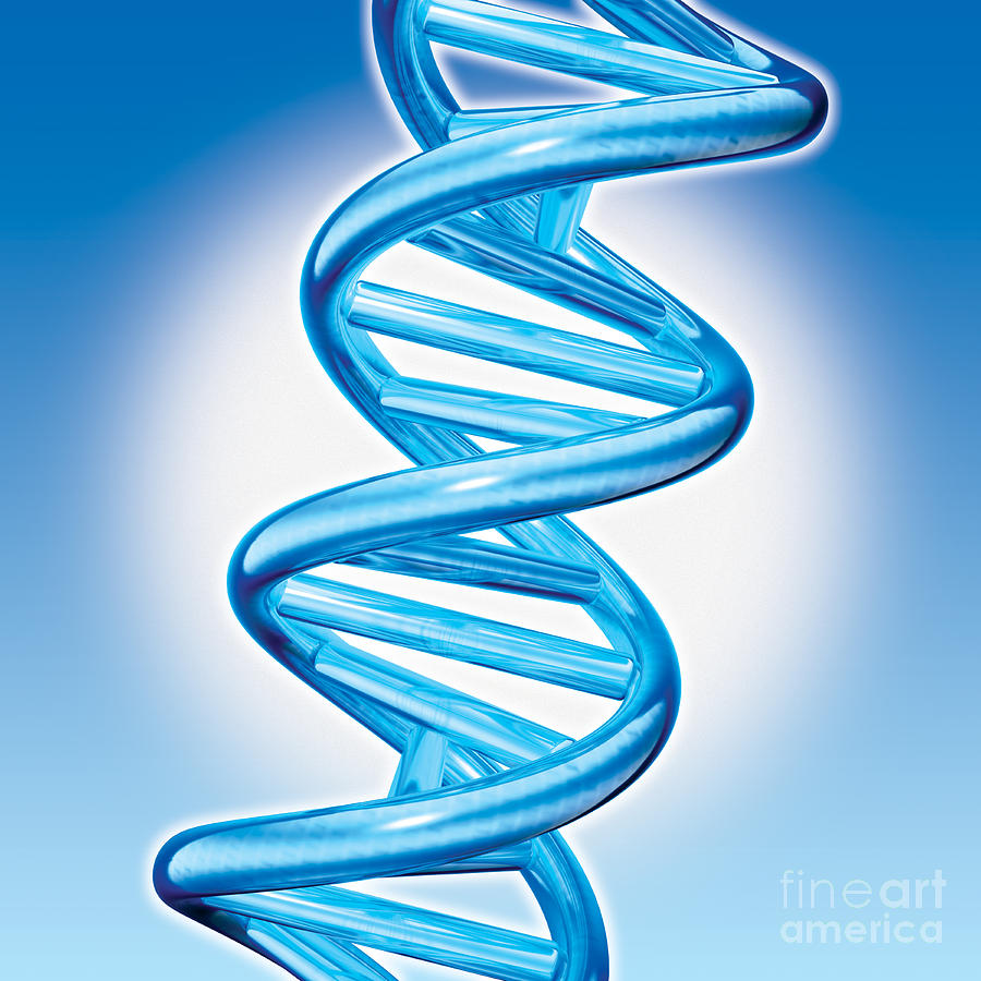 dna double helix How the double helix structure of dna was discovered work of watson, crick, franklin, wilkins, and chargaff.
