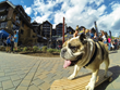 Skateboarding-dog-wonder Floyd is one of several special June guests at Antlers at Vail hotel. (Photo courtesy of Vail GoPro Mountain Games).
