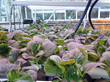 American Hydroponics Donates Equipment to Boston College as Part of...