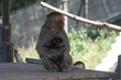 "Baby Baboon Named ""Mimi"" Born at Oakland Zoo"