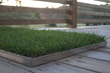 "Fresh Patch Launches ""Fresh Patch XL"" Grass Dog Potty for..."