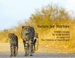 The International Educator Publishes Wildlife Photography Book to...