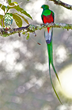Quetzal from Children of Haiti Project benefit book