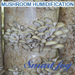 Mushroom Production Humidification