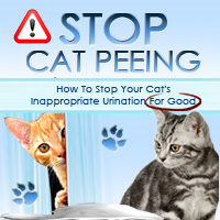 Thinking Outside The Box Review – The Key To Stop Cats Peeing Outside The Litter Box In 4 Days Or Less