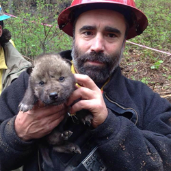 Wolf Puppies Rescued from Funny Fire