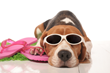 Dallas' Park Cities Pet Sitter Warns Pet Owners About the Effect of...
