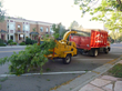 Colorado Springs Tree Removal | Front Range Arborists Inc. | Tree Trimming Colorado Springs CO