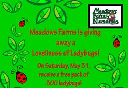 Ladybug Giveaway