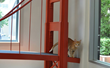 Celebrate the Grand Reopening of the San Francisco SPCA Adoption...