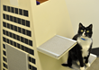 Transamerica Pyramid cat condo