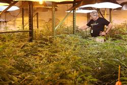 Ron Radtke Inspecting Plants