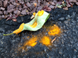 Ash tree leaf with Ash Rust