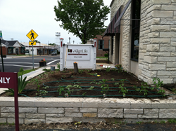 Dr. Mike Harbison's free community Health Missions Garden, Wood River Illinois
